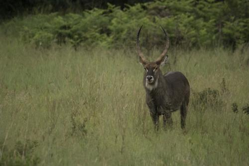 Kgaswane Mountain Reserve 2017a